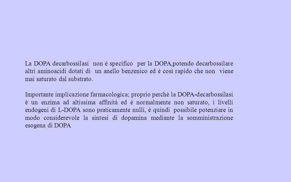 2 Catecolamine e vasi 1 e cuore IONOTROPO e DROMOTROPO POSITIVO