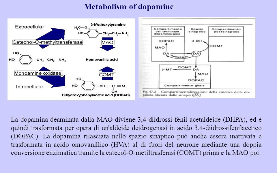 Metabolism of dopamine La dopamina deaminata dalla MAO diviene 3,4-diidrossi-fenil-acetaldeide (DHPA), ed è quindi trasformata per opera di un aldeide deidrogenasi in acido 3,4-diidrossifenilacetico (DOPAC).
