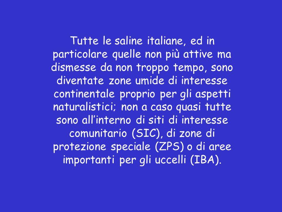SALINE D ITALIA in attività o da poco dismesse: CAGLIARI - NON PRODUTTIVE CERVIA (RAVENNA) CARLOFORTE (CARBONIA IGLESIAS) - NON PRODUTTIVE COMACCHIO (FERRARA) - NON PRODUTTIVE MARGHERITA DI SAVOIA ( BARLETTA-ANDRIA-TRANI ) MARSALA E MOZIA (TRAPANI) MOLENTARGIUS E POETTO (CAGLIARI) - NON PRODUTTIVE PRIOLO (SIRACUSA) - NON PRODUTTIVE SANT ANTIOCO (CARBONIA IGLESIAS) SIRACUSA - NON PRODUTTIVE TARQUINIA (VITERBO) - NON PRODUTTIVE TRAPANI E PACECO (TRAPANI) VOLTERRA (PISA)