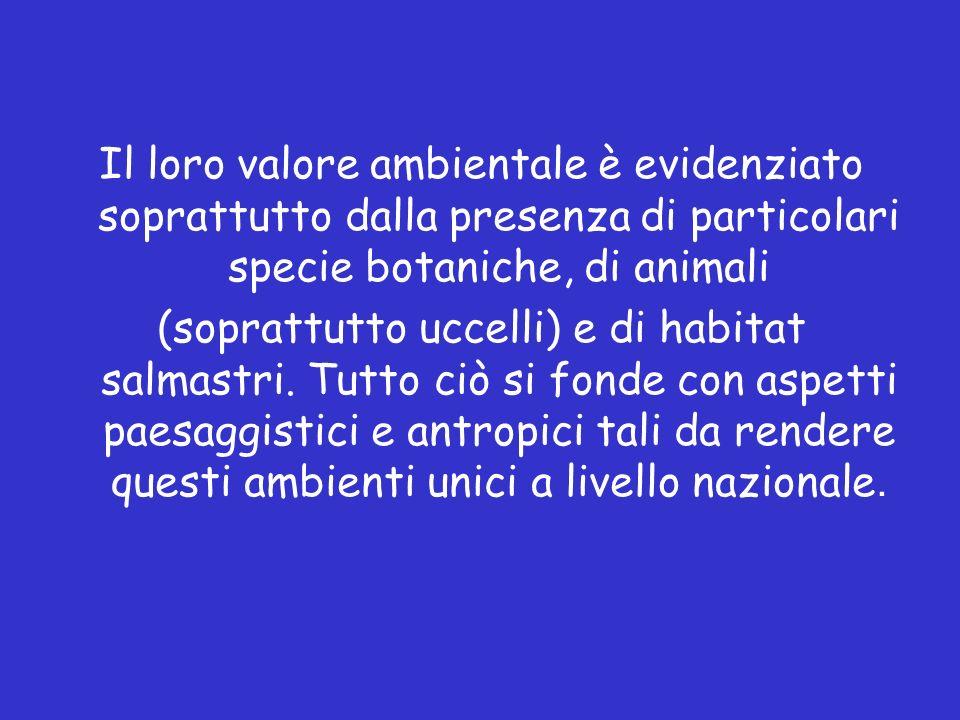 Il loro valore ambientale è evidenziato soprattutto dalla presenza di particolari specie botaniche, di animali (soprattutto uccelli) e di habitat salmastri.