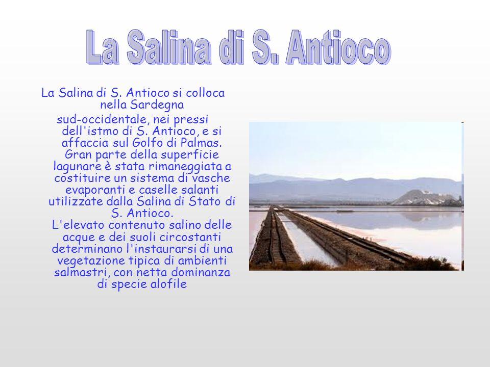 La Salina di S.Antioco si colloca nella Sardegna sud-occidentale, nei pressi dell istmo di S.