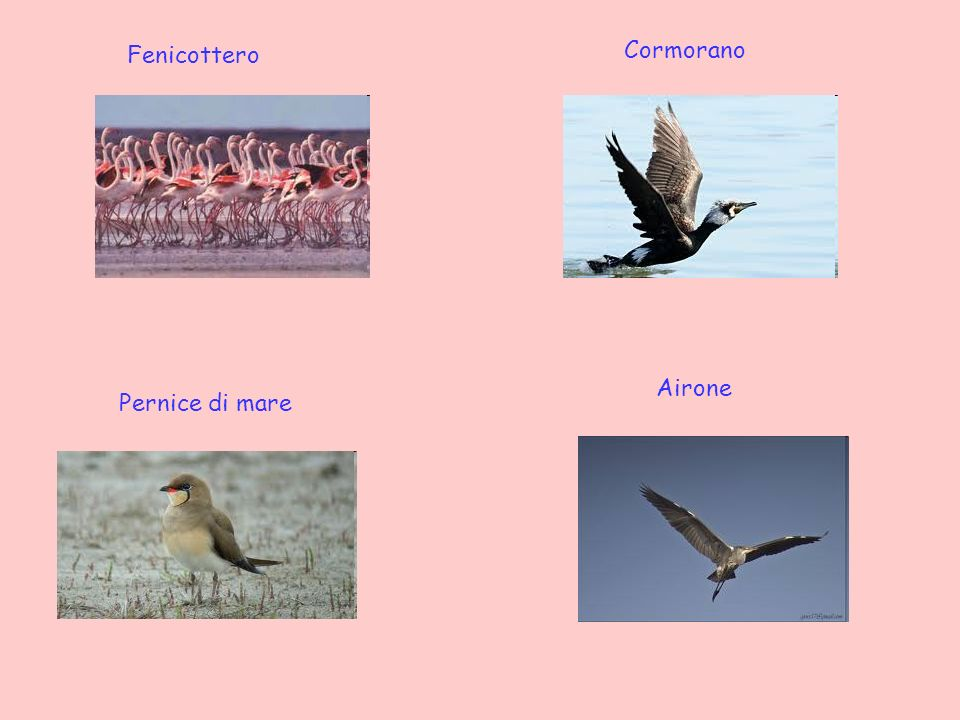 Le saline sono un importantissimo luogo di sosta per migliaia di uccelli durante la migrazione sia autunnale che primaverile, pertanto la zona risulta