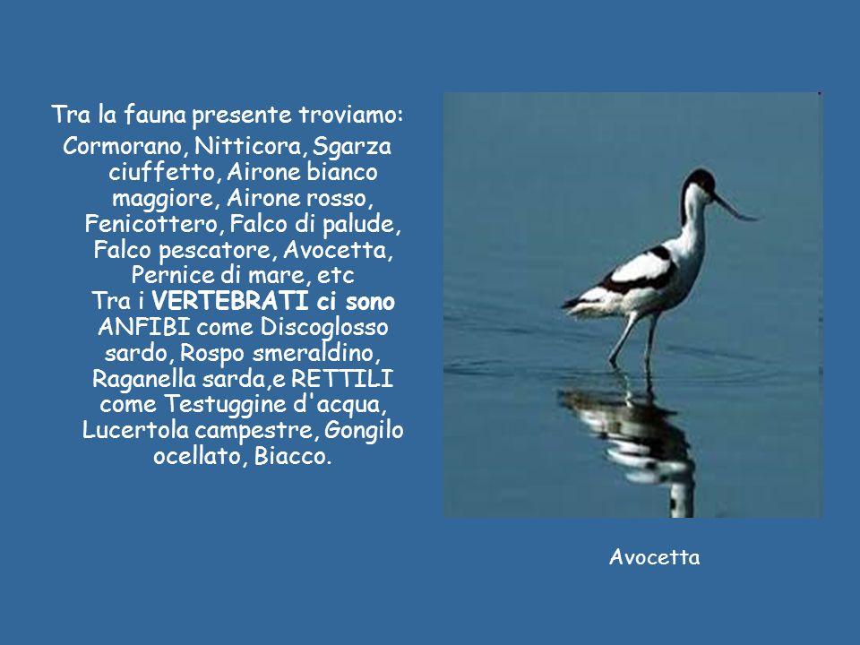 Fenicottero Airone Pernice di mare Cormorano