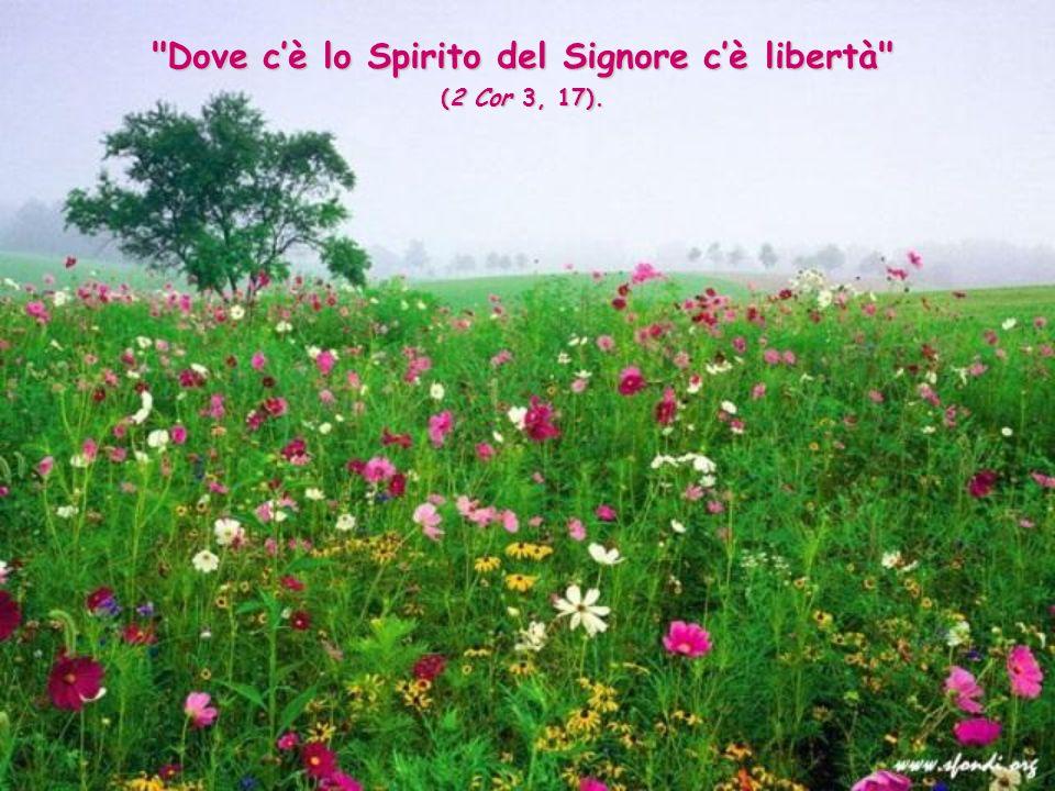 Dove cè lo Spirito del Signore cè libertà (2 Cor 3, 17).