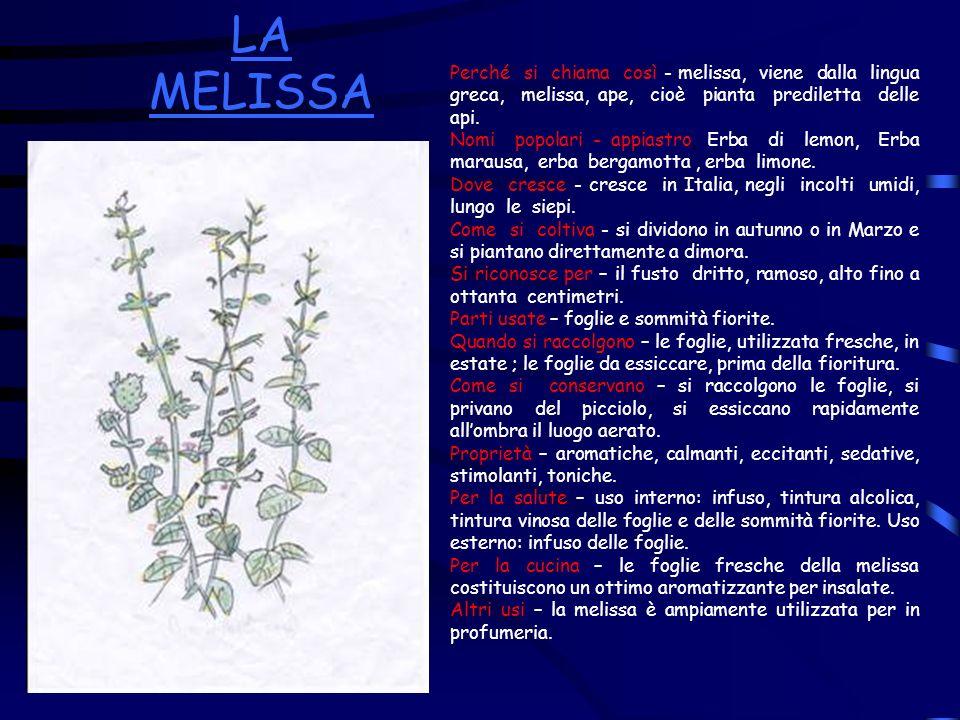 LA MELISSA Perché si chiama così - melissa, viene dalla lingua greca, melissa, ape, cioè pianta prediletta delle api. Nomi popolari - appiastro, Erba