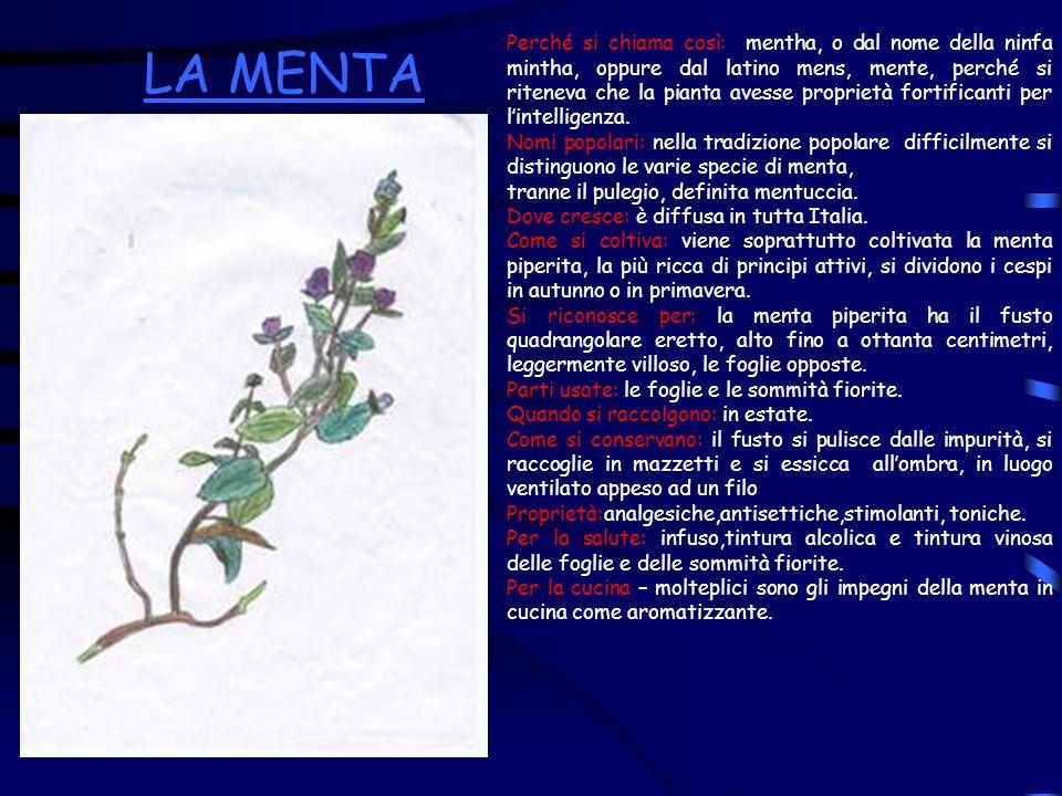 Perché si chiama così: mentha, o dal nome della ninfa mintha, oppure dal latino mens, mente, perché si riteneva che la pianta avesse proprietà fortifi