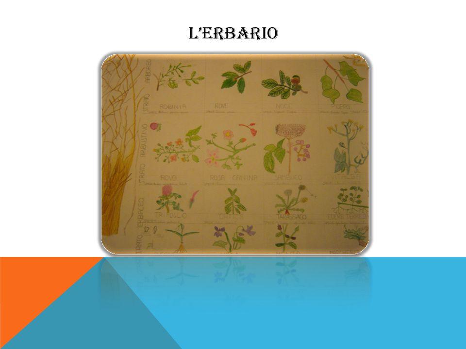 LERBARIO