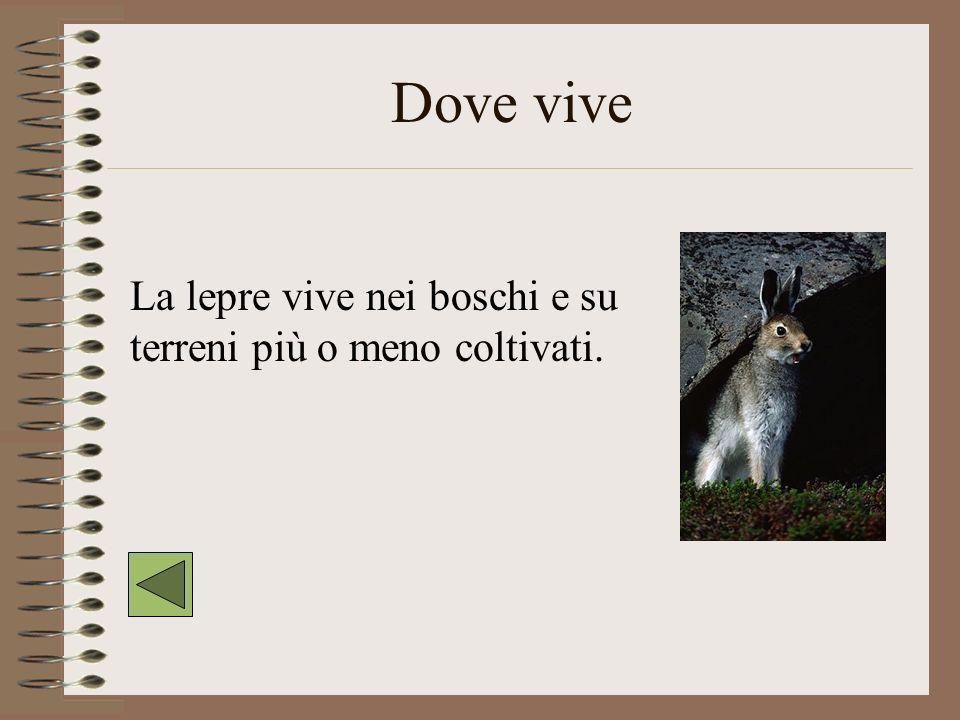 Comè La lepre è un mammifero simile ad un coniglio con le orecchie lunghe e le zampe posteriori lunghe e robuste.