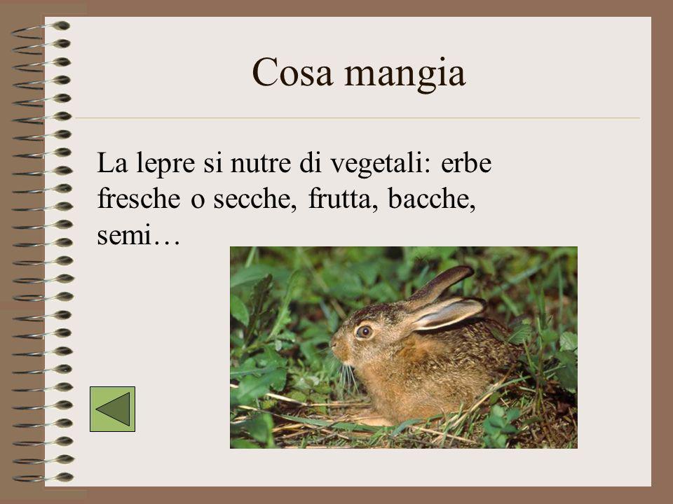 Dove vive La lepre vive nei boschi e su terreni più o meno coltivati.