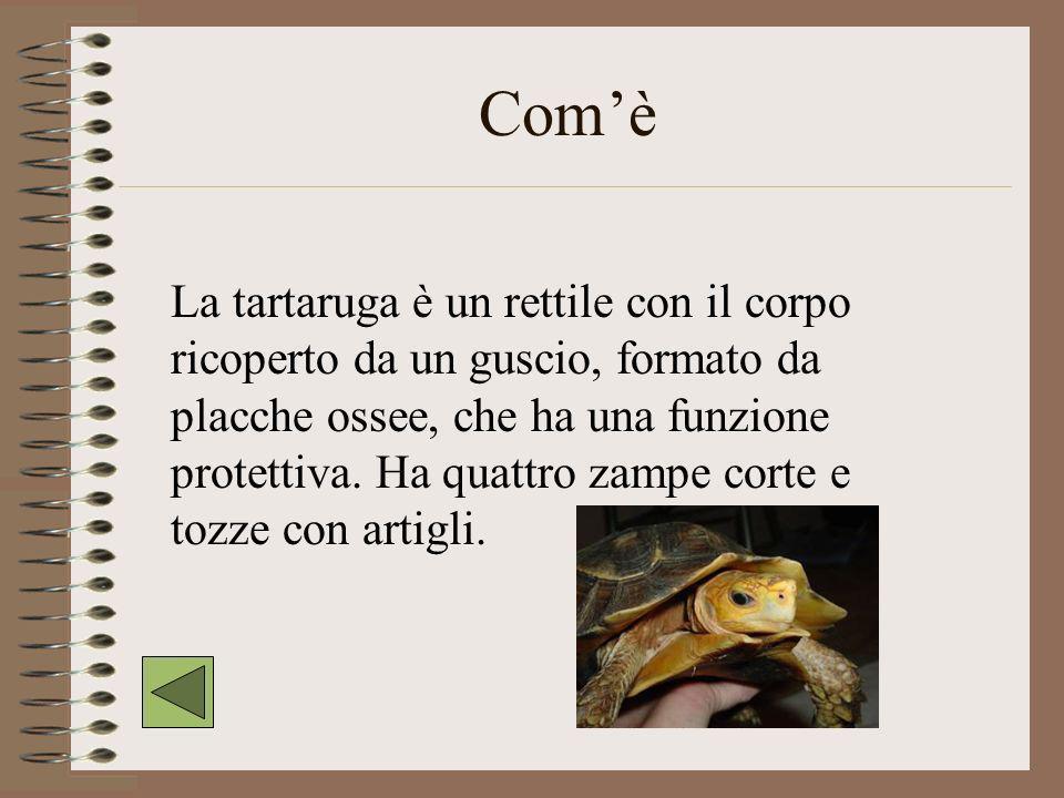 La tartaruga Comè Dove vive Cosa mangia