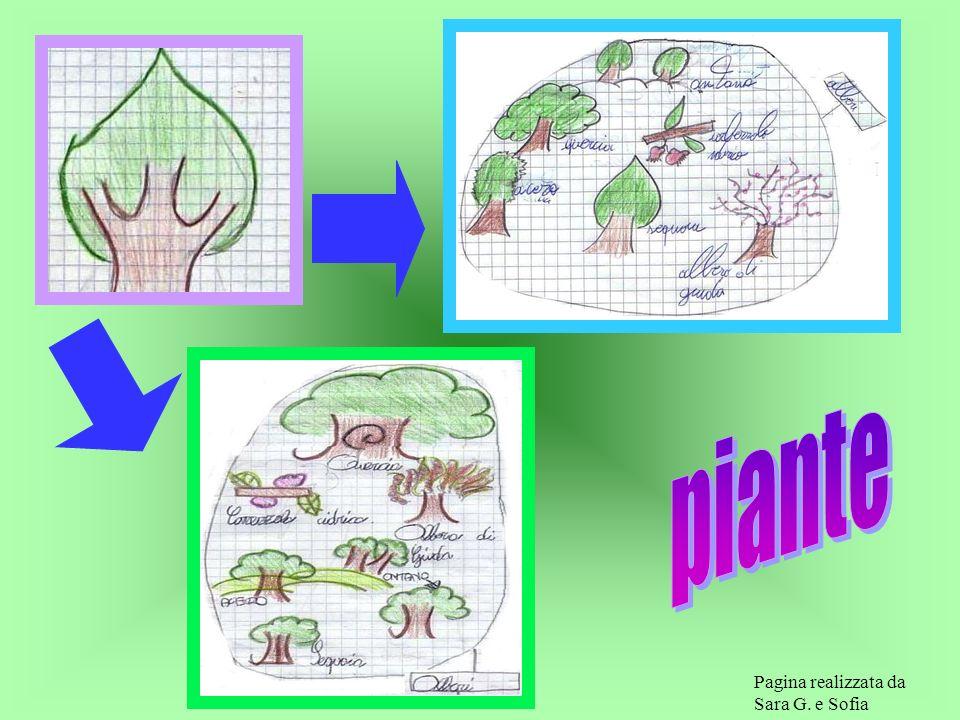 COSA PENSI SE DICI Le piante sono molto importanti per la vita sulla terra. Esse sono organismi autotrofi,che sanno fabbricarsi il cibo a partire dall