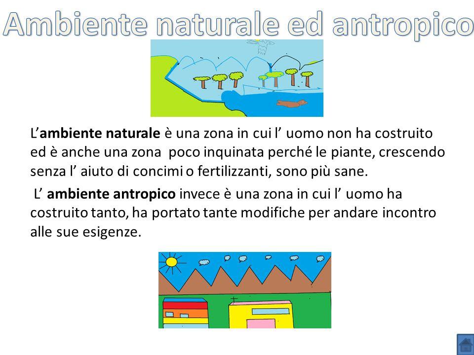 Lambiente naturale è una zona in cui l uomo non ha costruito ed è anche una zona poco inquinata perché le piante, crescendo senza l aiuto di concimi o