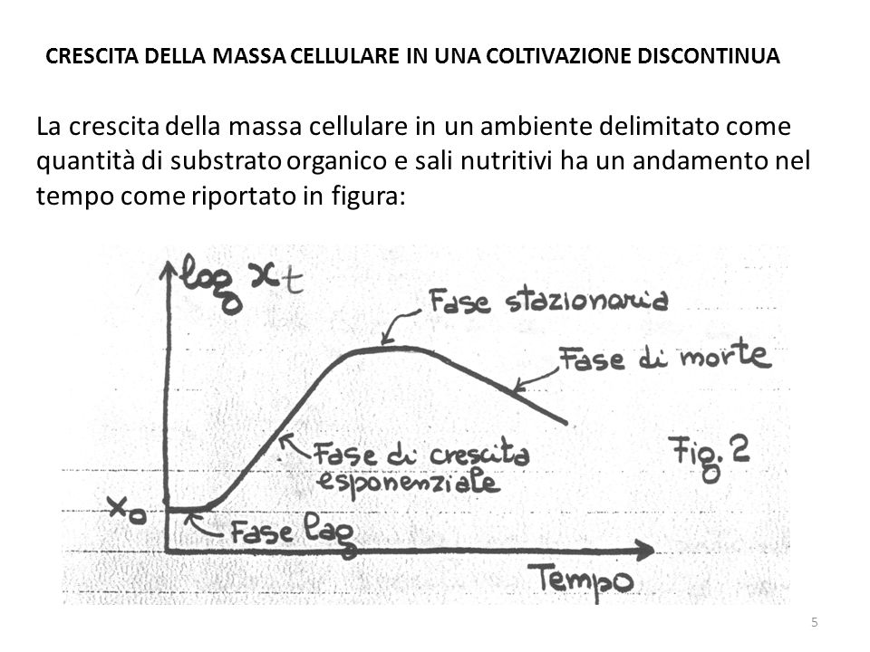CRESCITA DELLA MASSA CELLULARE IN UNA COLTIVAZIONE DISCONTINUA La crescita della massa cellulare in un ambiente delimitato come quantità di substrato
