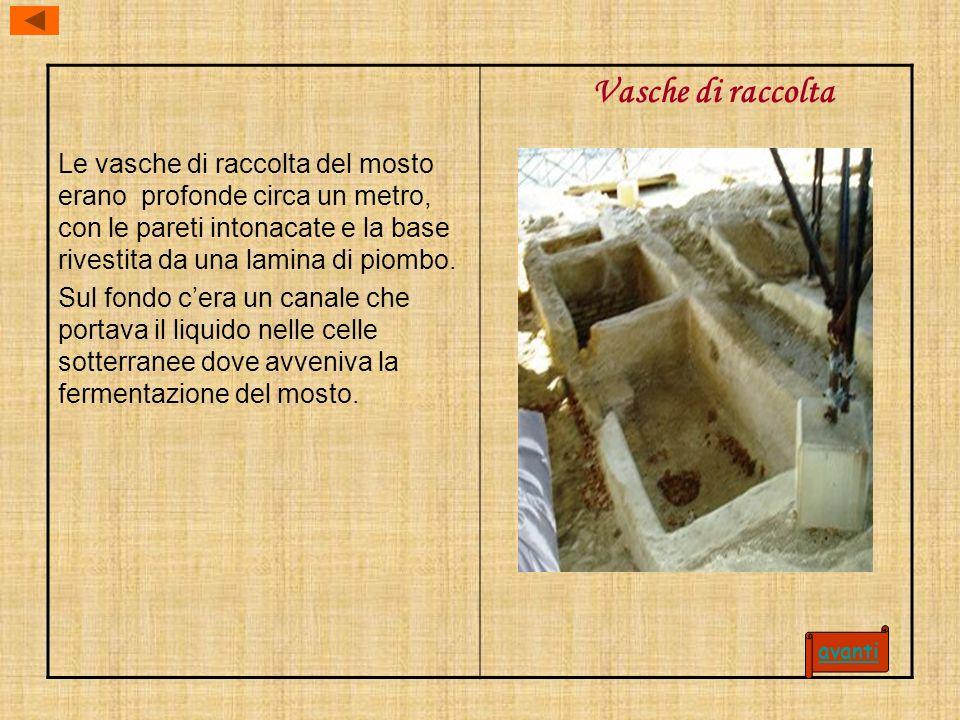 Le vasche di raccolta del mosto erano profonde circa un metro, con le pareti intonacate e la base rivestita da una lamina di piombo. Sul fondo cera un