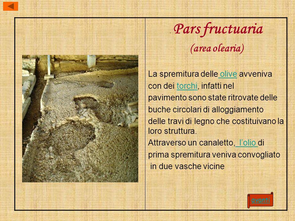 Pars fructuaria (area olearia) La spremitura delle olive avveniva olive con dei torchi, infatti neltorchi pavimento sono state ritrovate delle buche circolari di alloggiamento delle travi di legno che costituivano la loro struttura.