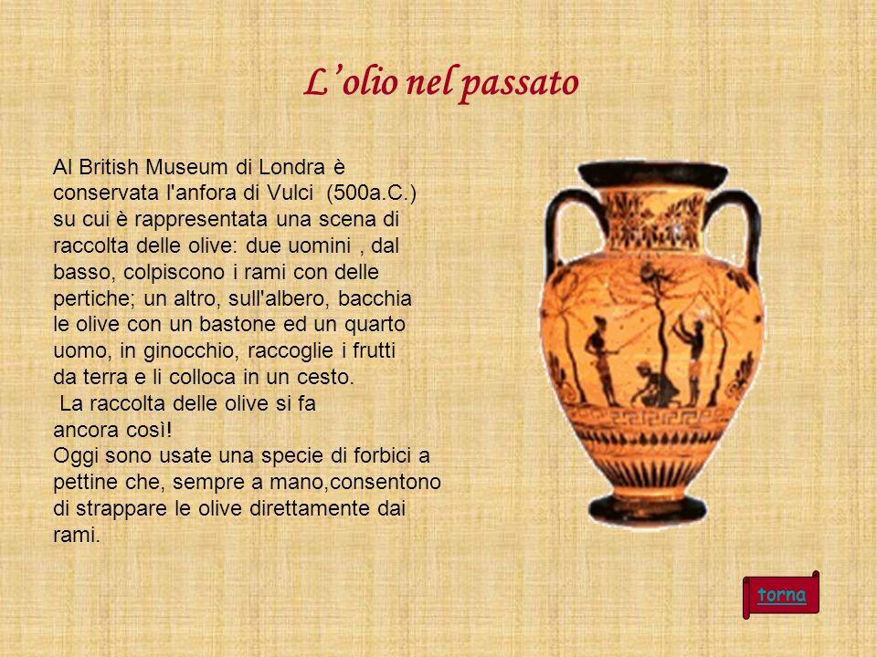 Lolio nel passato Al British Museum di Londra è conservata l'anfora di Vulci (500a.C.) su cui è rappresentata una scena di raccolta delle olive: due u