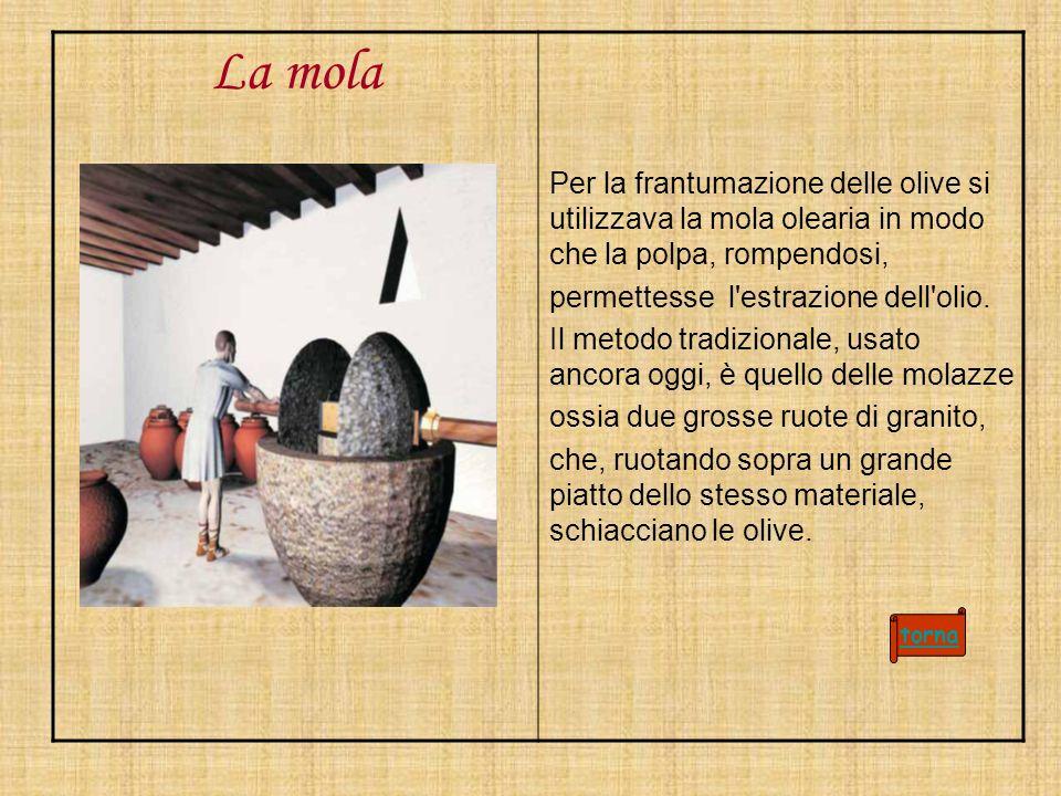La mola Per la frantumazione delle olive si utilizzava la mola olearia in modo che la polpa, rompendosi, permettesse l'estrazione dell'olio. Il metodo