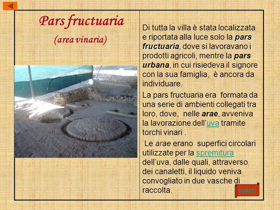 Pars fructuaria (area vinaria) pars fructuaria Di tutta la villa è stata localizzata e riportata alla luce solo la pars fructuaria, dove si lavoravano
