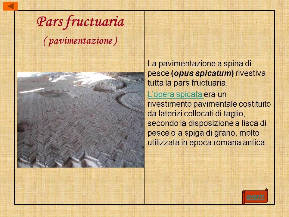 Pars fructuaria ( pavimentazione ) La pavimentazione a spina di pesce (opus spicatum) rivestiva tutta la pars fructuaria. L'opera spicata L'opera spic