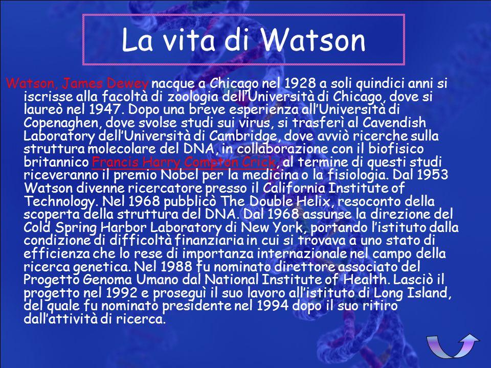 La vita di WatsonLa vita di WatsonLa vita di WatsonLa vita di Watson La vita di CrickLa vita di CrickLa vita di CrickLa vita di Crick La scopertaLa sc
