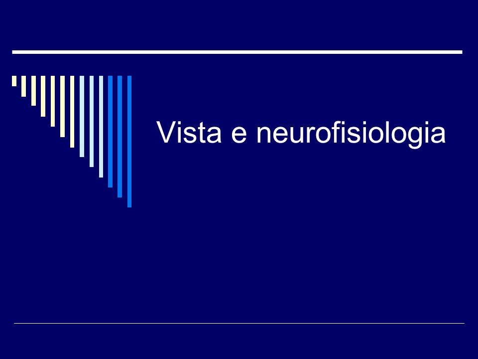 Vista e neurofisiologia