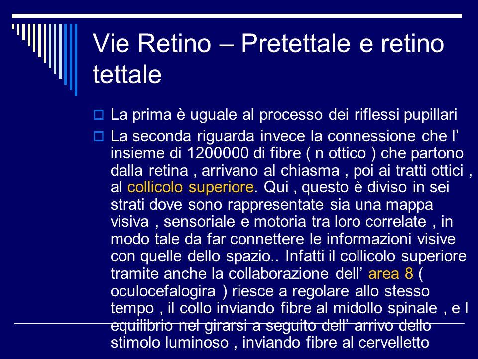 Vie Retino – Pretettale e retino tettale La prima è uguale al processo dei riflessi pupillari La seconda riguarda invece la connessione che l insieme
