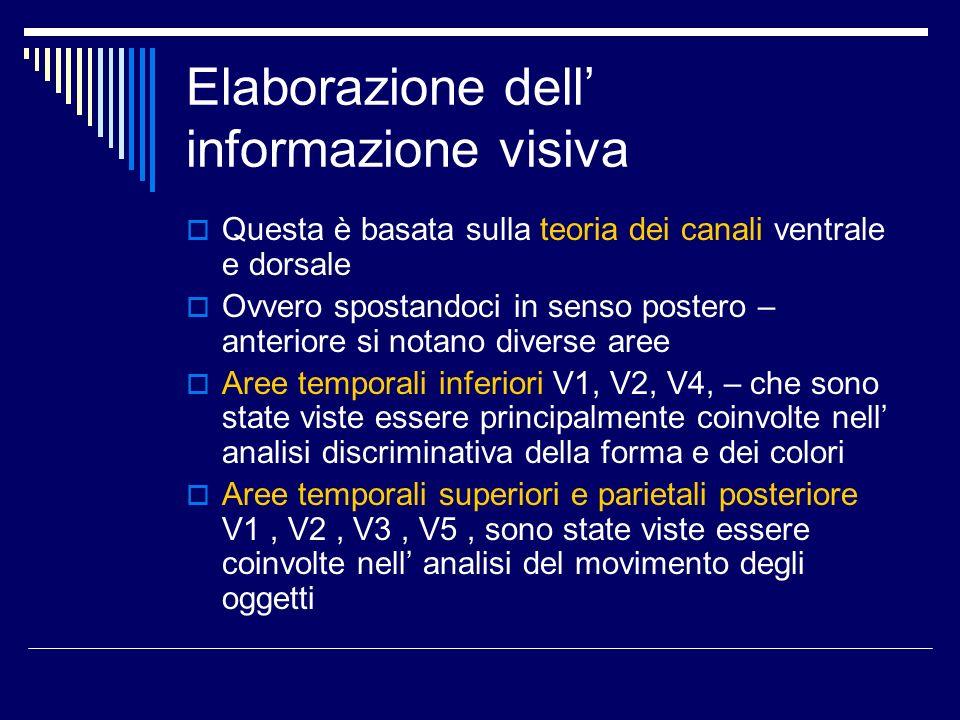 Elaborazione dell informazione visiva Questa è basata sulla teoria dei canali ventrale e dorsale Ovvero spostandoci in senso postero – anteriore si no
