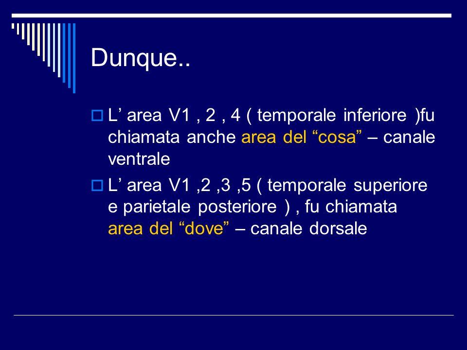 Dunque.. L area V1, 2, 4 ( temporale inferiore )fu chiamata anche area del cosa – canale ventrale L area V1,2,3,5 ( temporale superiore e parietale po