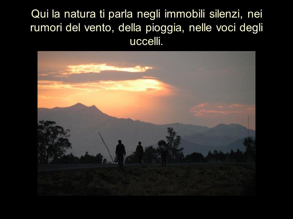 Qui la natura ti parla negli immobili silenzi, nei rumori del vento, della pioggia, nelle voci degli uccelli.