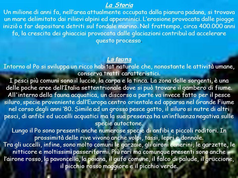 La Flora L attività dell uomo ha quasi completamente fatto scomparire la flora spontanea tipica della Pianura Padana.