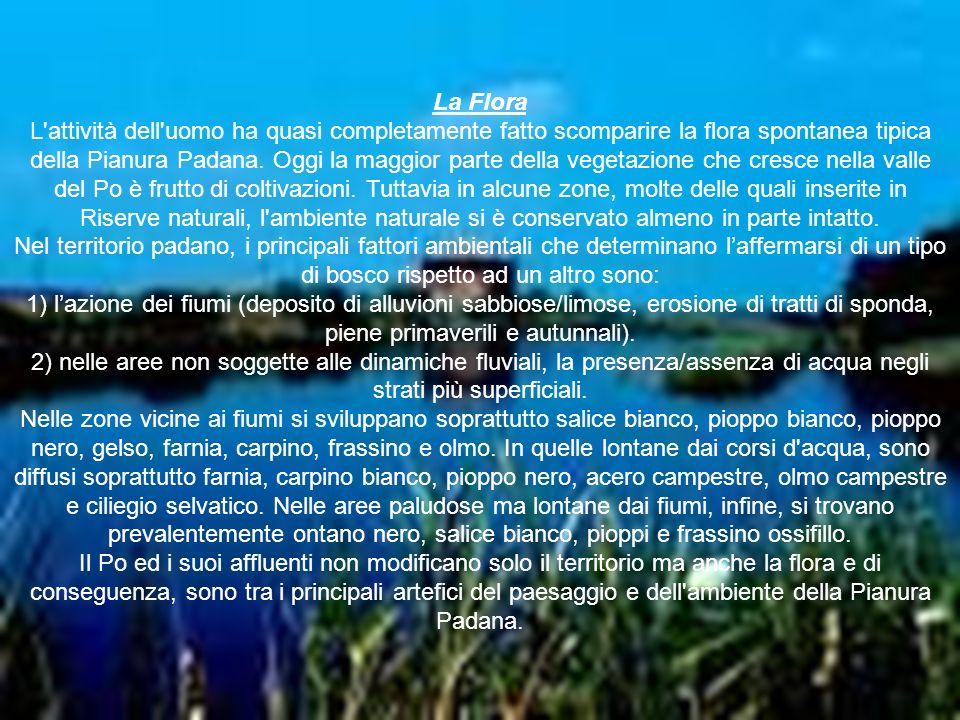 La Flora L'attività dell'uomo ha quasi completamente fatto scomparire la flora spontanea tipica della Pianura Padana. Oggi la maggior parte della vege