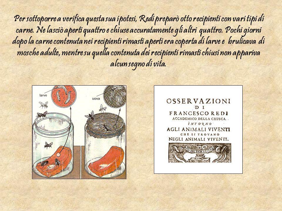 Per sottoporre a verifica questa sua ipotesi, Redi preparò otto recipienti con vari tipi di carne. Ne lasciò aperti quattro e chiuse accuratamente gli