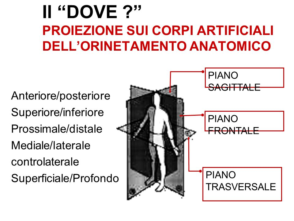 Il DOVE ? PROIEZIONE SUI CORPI ARTIFICIALI DELLORINETAMENTO ANATOMICO Anteriore/posteriore Superiore/inferiore Prossimale/distale Mediale/laterale con