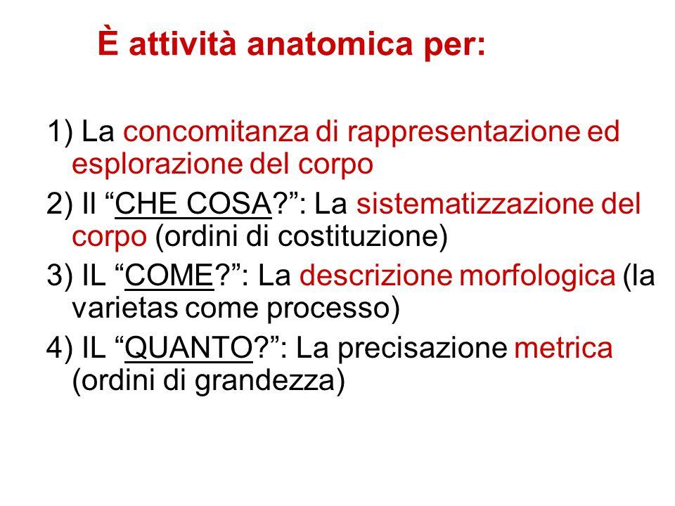 È attività anatomica per: 1) La concomitanza di rappresentazione ed esplorazione del corpo 2) Il CHE COSA?: La sistematizzazione del corpo (ordini di