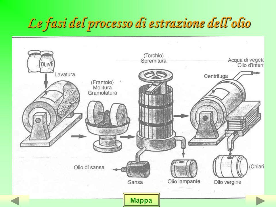Lestrazione dellolio Le olive vengono messe in apposite cassette, ben areate,lì sostano per 24 massimo 48 ore, dopo vengono messe nella tramaglie, che