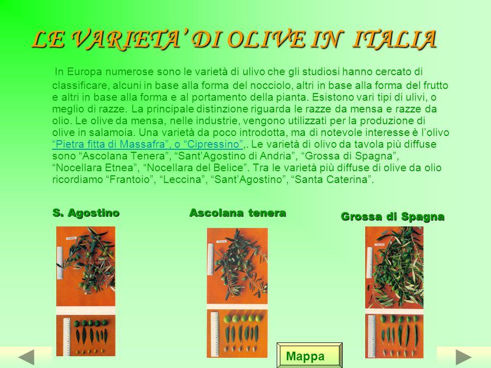 LA PRODUZIONE DELLOLIO DOLIVA IN ITALIA La produzione dellolio doliva è praticata in prevalenza nelle zone più a sud del Mediterraneo.