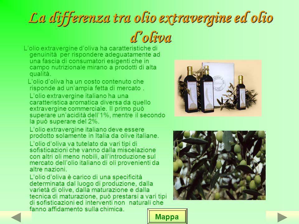 Il cipressino Lolivo di Pietra fitta di Massafra o Cipressino è una pianta dotata di buona resistenza che riesce a sopportare gli sbalzi climatici.