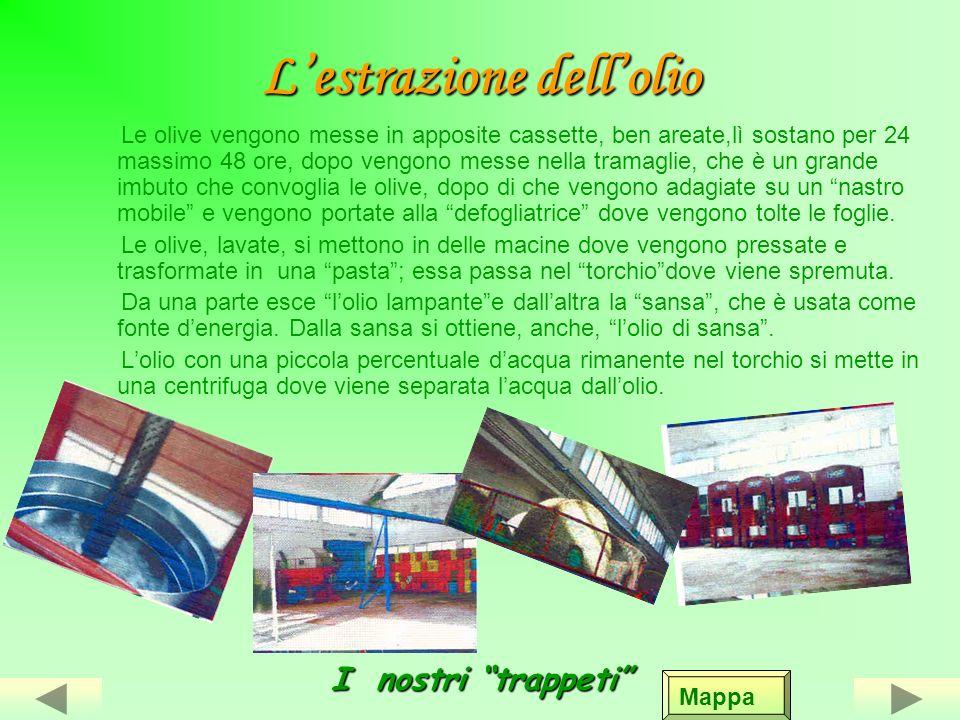 Lolio doliva Appena raccolte, le olive mature emettono un olio finissimo, chiamato olio di banchina o di Mammarèdole. Prezioso quando ancora non erano