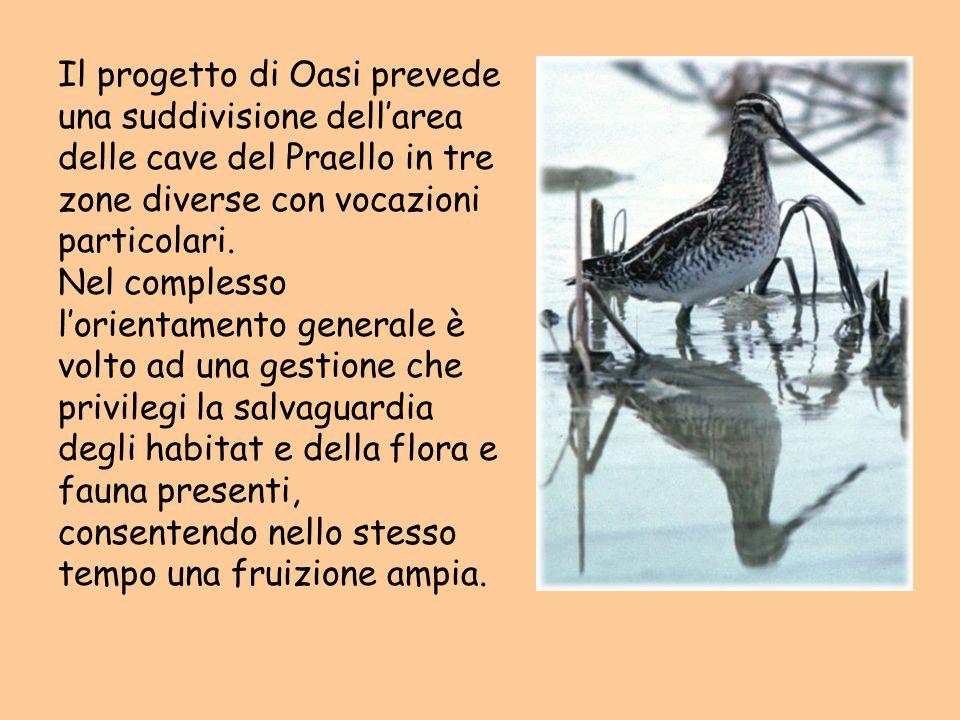 Il progetto di Oasi prevede una suddivisione dellarea delle cave del Praello in tre zone diverse con vocazioni particolari. Nel complesso lorientament
