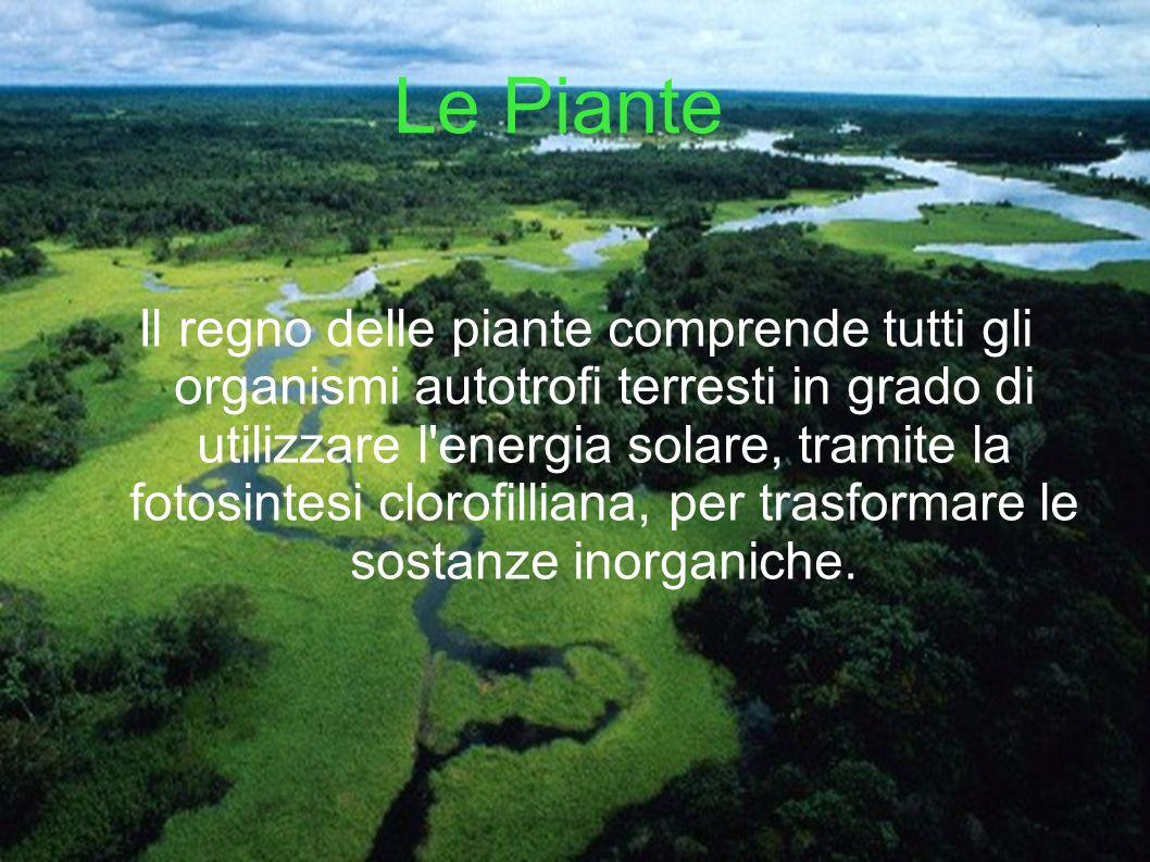 Le Piante Il regno delle piante comprende tutti gli organismi autotrofi terresti in grado di utilizzare l'energia solare, tramite la fotosintesi cloro