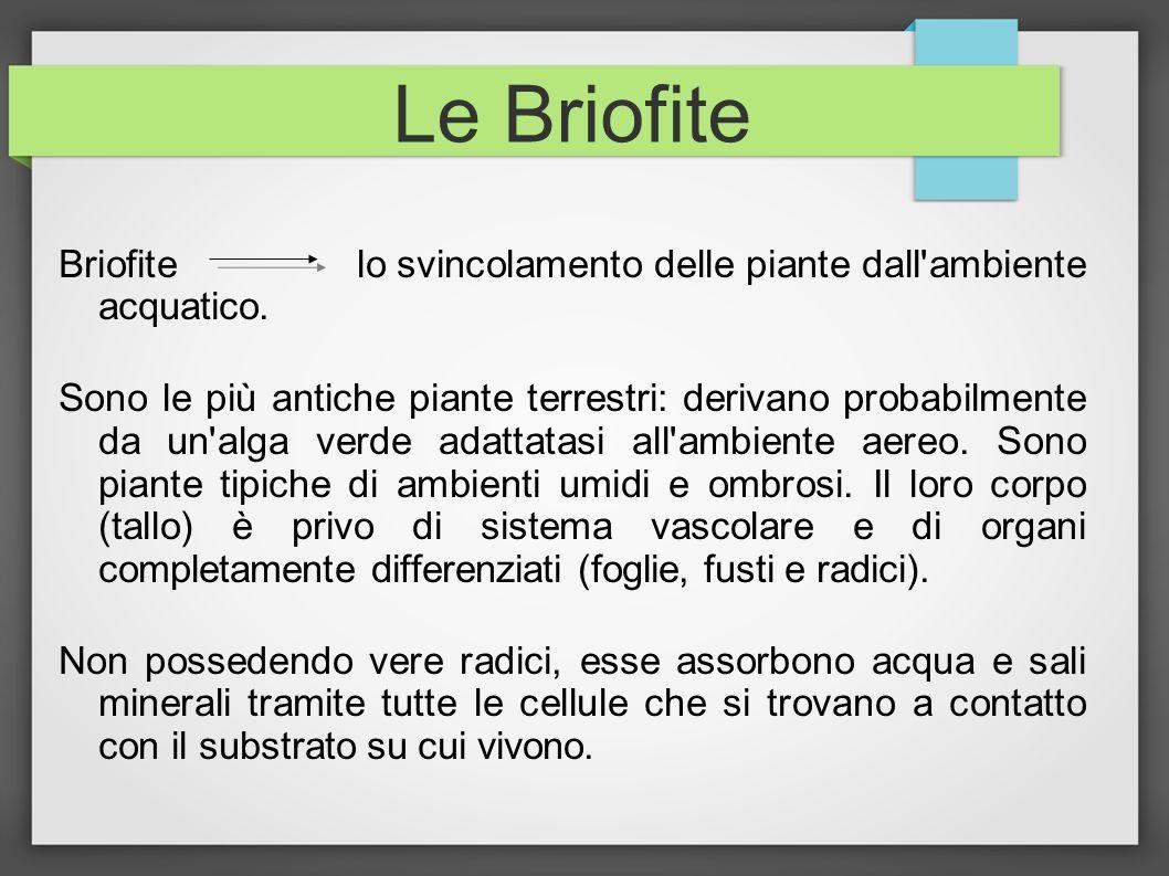 Le Briofite Briofite lo svincolamento delle piante dall'ambiente acquatico. Sono le più antiche piante terrestri: derivano probabilmente da un'alga ve