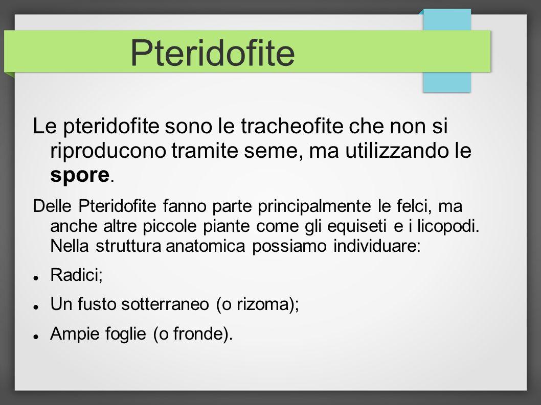 Pteridofite Le pteridofite sono le tracheofite che non si riproducono tramite seme, ma utilizzando le spore. Delle Pteridofite fanno parte principalme