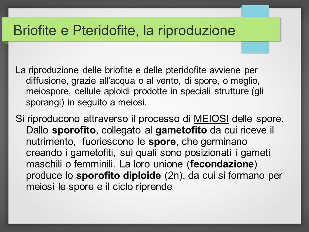 Briofite e Pteridofite, la riproduzione La riproduzione delle briofite e delle pteridofite avviene per diffusione, grazie all'acqua o al vento, di spo