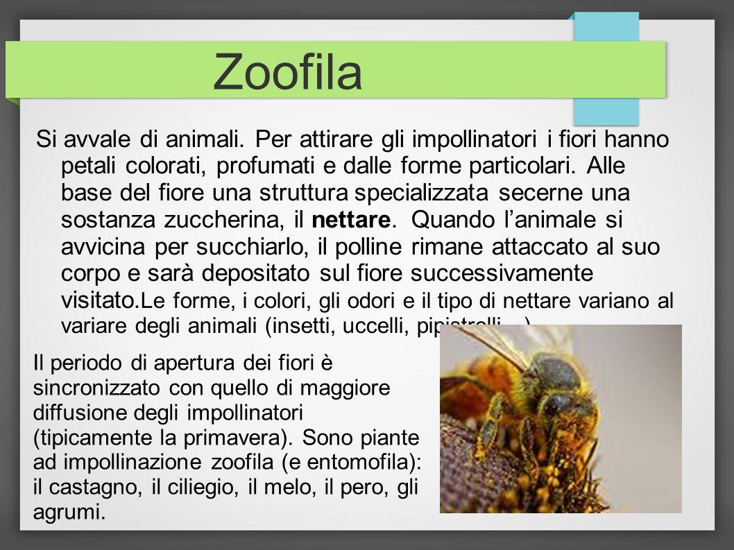 Zoofila Si avvale di animali. Per attirare gli impollinatori i fiori hanno petali colorati, profumati e dalle forme particolari. Alle base del fiore u