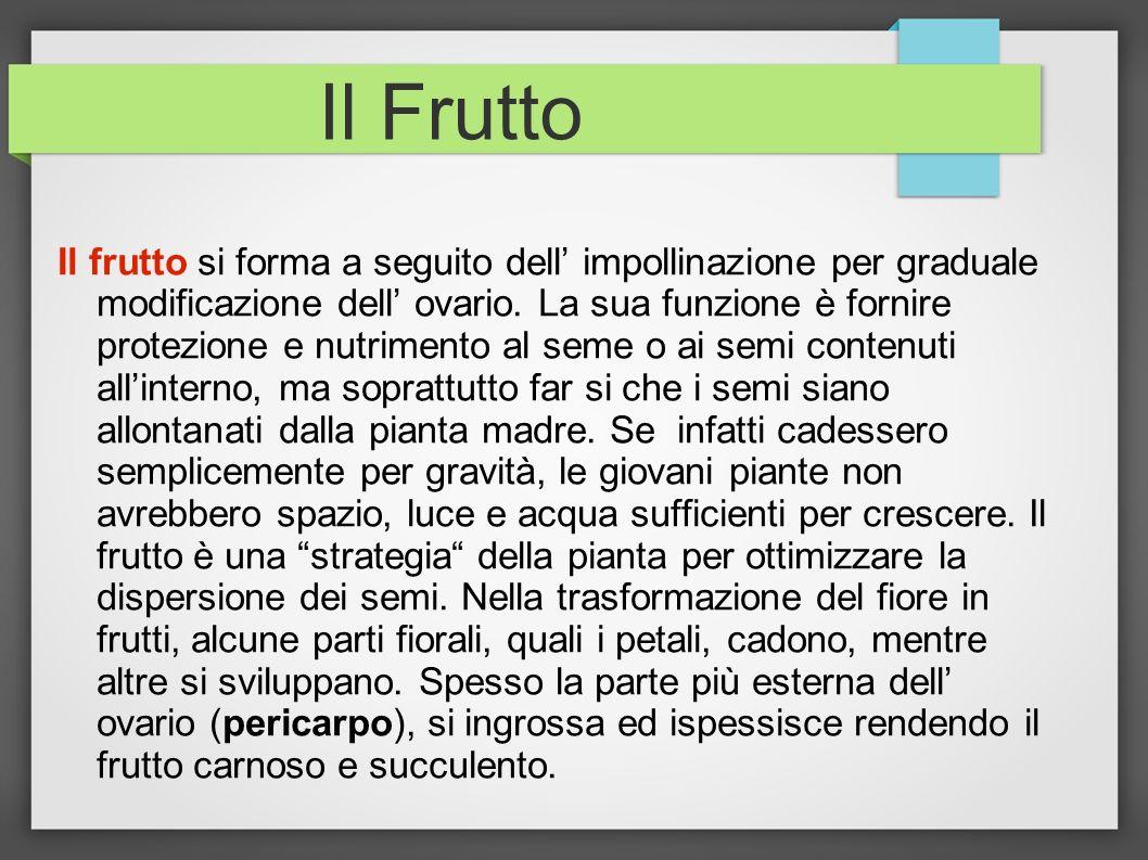 Il Frutto Il frutto si forma a seguito dell impollinazione per graduale modificazione dell ovario. La sua funzione è fornire protezione e nutrimento a