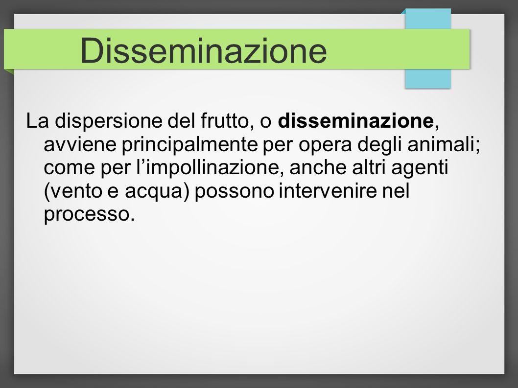 Disseminazione La dispersione del frutto, o disseminazione, avviene principalmente per opera degli animali; come per limpollinazione, anche altri agen