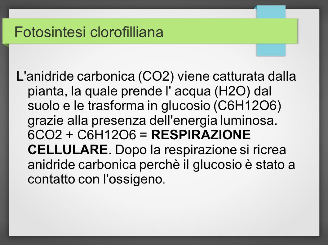 Fotosintesi clorofilliana L'anidride carbonica (CO2) viene catturata dalla pianta, la quale prende l' acqua (H2O) dal suolo e le trasforma in glucosio