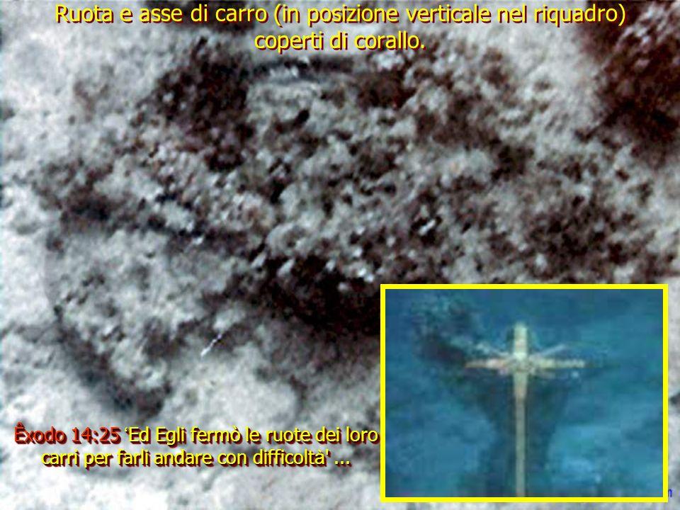 La ruota di carro incrostata di corallo, filmata sotto la costa saudita, è paragonabile a questa del carro trovato nella tomba di Tutancamon.