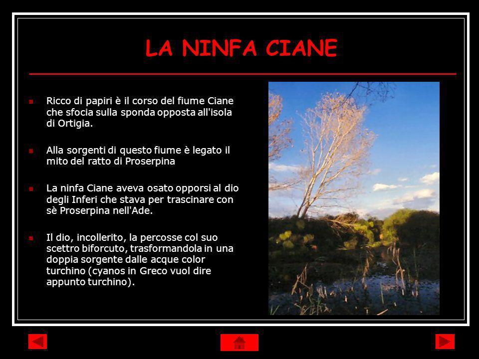 LA NINFA CIANE Ricco di papiri è il corso del fiume Ciane che sfocia sulla sponda opposta all'isola di Ortigia. Alla sorgenti di questo fiume è legato