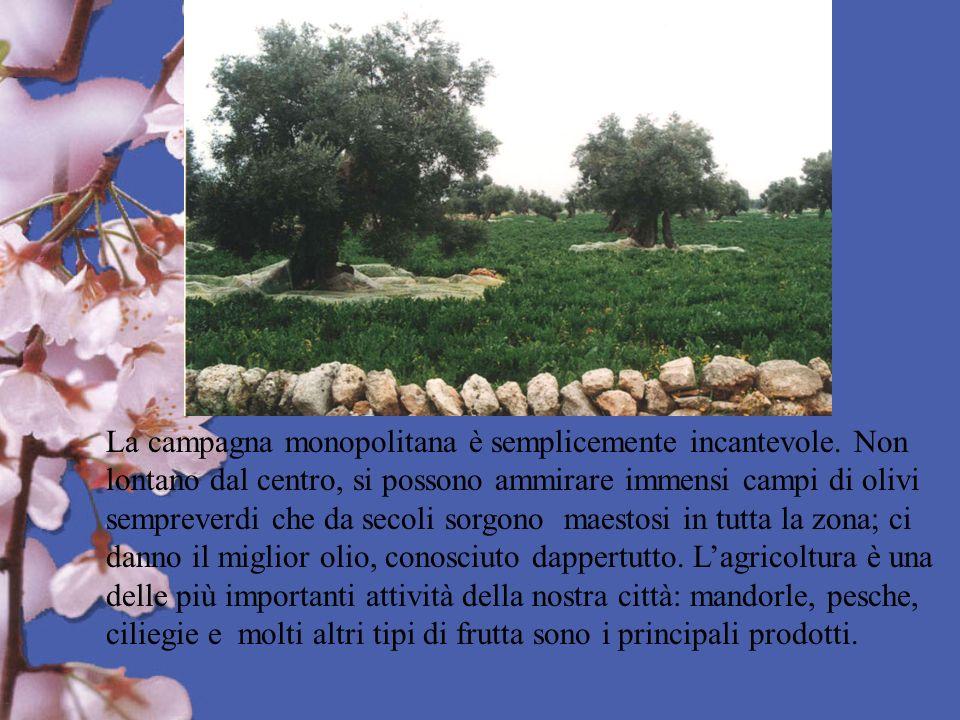 La campagna monopolitana è semplicemente incantevole. Non lontano dal centro, si possono ammirare immensi campi di olivi sempreverdi che da secoli sor